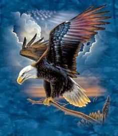 Harley Davidson News – Harley Davidson Bike Pics Patriotic Pictures, Eagle Pictures, Eagle Painting, Eagle Art, Harley Davidson Logo, Harley Davison, I Love America, Motorcycle Art, Wildlife Art