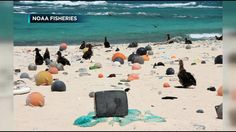 Researchers save monk seals and collect trash in Northwestern Ha - Hawaii News Now - KGMB and KHNL