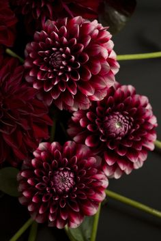 dhalia by mellow_stuff, via Flickr