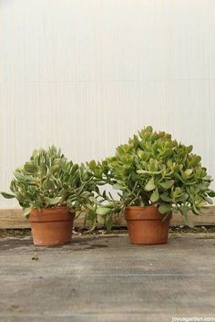 jade plants who has an hour a day to spend watering their plants this list of 15 easy to grow houseplants will make life easier weu0027re sure you can find at