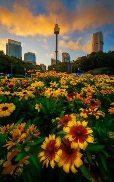 Sydney 2015 by Goff Kitsawad on 500px