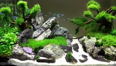 2014 AGA Aquascaping Contest - Entry #440
