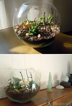 Little Kingdoms: A Terrarium Tutorial