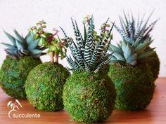Kokedama succulente mix