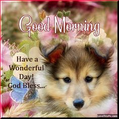 Good Morning Dog, Cute Good Morning Quotes, I Love You Pictures, Dog Pictures, Put Your Finger Here, Spring Animals, Facebook Image, Pet Names, Funny Cute