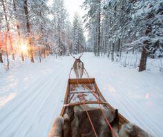 Santa Claus Reindeer photo: Traditional handmade sleigh of Santa Claus Reindeer in Santa Claus Village in Rovaniemi in Finnish Lapland Reindeer Photo, Reindeer And Sleigh, Santa Claus Village, Santa's Village, Arctic Circle, Summertime, Snow, Cold, Outdoor