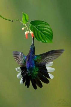 Kolibri mit Größenvergleich ;-)
