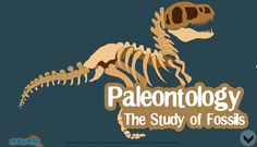 Read about Paleontology, is the study of the fossil forms of all pre-historic life of animals. Scientists who study Paleontology are called Paleontologists. For more interacting #Generalknowledge for kids, visit: http://mocomi.com/learn/general-knowledge/