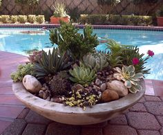 my next pool side planter.  Arranged by AJ's Landscapers in Houston, TX
