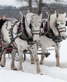 During WinterFest Weekend, Foxglove Farm brings teams of beautiful Percheron draft horses for horse-drawn rides at Lyman Orchards.