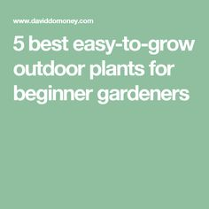 Here's 5 fuss-free plants that you need to have in your garden. Perfect for beginner gardeners - they grow in any soil and are hardy and low-maintenance. Plus tips on how to plant, and links to step by step guides. Outdoor Plants, Garden Plants, Gardening For Beginners, Gardening Tips, Free Plants, Low Maintenance Garden, Bulb Flowers, Get Outside, Garden Landscaping