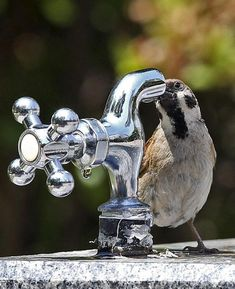 暑い日には水分の補給を忘れずにね! REUTERS/Shin Young-Geun/Yonhap Animals And Pets, Funny Animals, Cute Animals, Sparrows, Little Birds, Beautiful Birds, Bird Houses, Blue Bird, Wings
