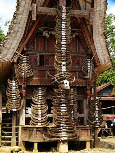 Tedong - buffalo horns on traditional house as a tradition in Toraja land. (Toraja, South Sulawesi, Indonesia)