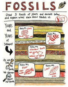 Fossils - What Lived Before - Foldable by Science Doodles
