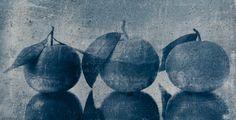Cyanotype | Peter Mrhar