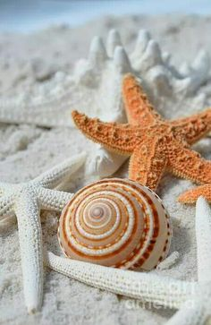 Sea Ocean Things