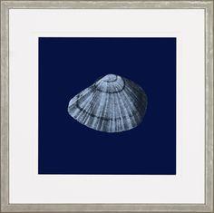 Midnight Shells Framed Painting Print