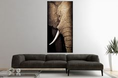 Interior :: Obraz dekoracyjny Elephant 75x150cm (Z10886)