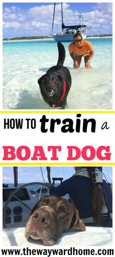 to sail with your dog? Three sailors on how to train a boat dog Want to sail with your dog? Three sailors share all via to sail with your dog? Three sailors share all via Buy A Boat, Make A Boat, Build Your Own Boat, Sailboat Living, Living On A Boat, Boat Building Plans, Boat Plans, Dogs On Boats, Boating Tips