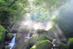 Take a Forest Bath