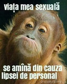 All information about Funny Smiling Animal Faces. Pictures of Funny Smiling Animal Faces and many more. Funny Animal Faces, Silly Faces, Funny Animal Pictures, Funny Faces, Funny Animals, Baby Orangutan, Chimpanzee, Los Primates, Types Of Monkeys