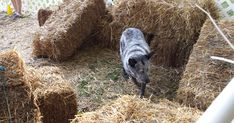 Barn Hunt: Doggy fun, even without a barn