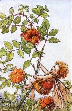 The Song Of The Robins Pincushion Fairy, an autumn Flower Fairy poem:  People come and look at me,  Asking who this rogue may be?  —Up to mischief, they suppose,  Perched upon the briar-rose.
