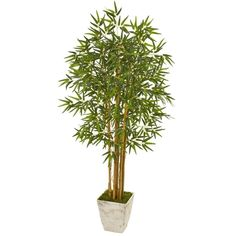 Nearly Natural 65 in. Bamboo Artificial Tree in Country White Planter 9853 - The... - Modern Design Bamboo Tree, Bamboo Plants, Faux Plants, Cedar Plant, Fern Plant, Artificial Boxwood, Artificial Tree, Ivy Plants, Foliage Plants