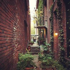 ivy alley