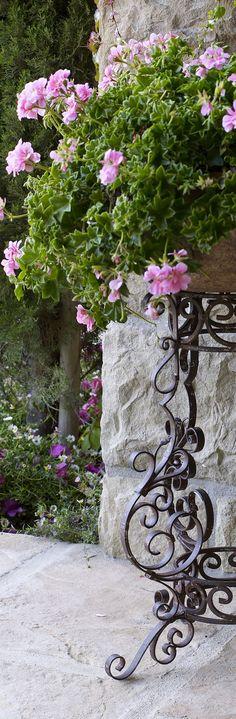 Iron Scroll Planters | Outdoor Entertaining