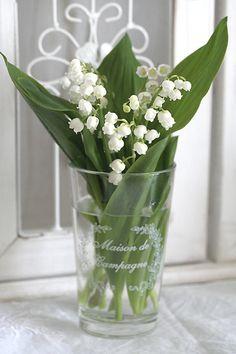 *好きちょこ*の画像|エキサイトブログ (blog) Lily Of The Valley Bouquet, Stacked Pots, Happy Birthday Messages, White Cottage, Ikebana, Bellisima, Garden Plants, Flower Art, Orchids