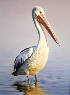 pelican | Morning Colours-Australian Pelican,oil on canvas by Brett Jarrett $ ...