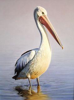 pelican | Morning Colours-Australian Pelican,oil on canvas by Brett Jarrett $ ...