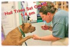 Don't forget this Sat Nail Trims!  #doggiepedi #pawprintpantry #Niantic #eastlyme