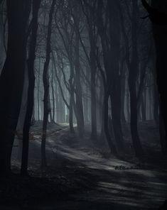 Mundo Design, Misty Forest, Magical Forest, Dead Forest, Foggy Forest, Autumn Forest, Fantasy Landscape, Dark Landscape, Fantasy Art