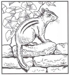 Printable 48 Realistic Animal Coloring Pages 3629 - Free Coloring ...