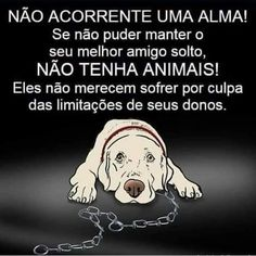 Não acorrente! Love Pet, I Love Dogs, Pitbull, Animals And Pets, Cute Animals, Faith In Humanity, All Dogs, My Animal, Good People