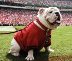 Russ, our stand-in, temporary mascot until the next Changing Of The Collar Ceremony for the new Uga. Damn Good Dawg!