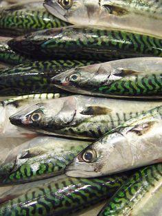 mackerel - photo/picture definition - mackerel word and phrase image