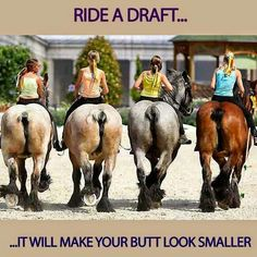 Ride a draft it will make your butt look smaller Horse Love, Horse Girl, Horse Humor, Funny Horse Quotes, Funny Horses, Cowboy Humor, All The Pretty Horses, Beautiful Horses, Animals Beautiful