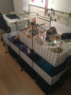 Gallery - C and C Guinea Pig Cages Diy Guinea Pig Cage, Guinea Pig House, Pet Guinea Pigs, Guinea Pig Care, Cages For Guinea Pigs, Bunny Cages, Rabbit Cages, Reptile Cage, Reptile Enclosure