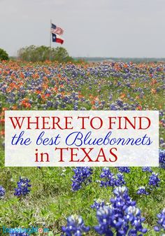 If you're looking for info on where to see Texas Bluebonnets, Traveling Mom has you covered! Winter rains make the Texas bluebonnets bloom! Want to snap the perfect spring pic? Here are great spots to see the pretty Texas state flower. Texas Roadtrip, Texas Travel, Travel Usa, Vacation Places, Vacation Spots, Vacation Ideas, Texas Tourism, Texas Bucket List, Texas Parks