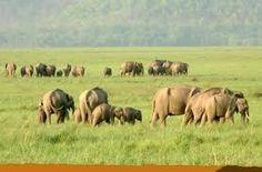 """Résultat de recherche d'images pour """"ranthambore national park"""""""