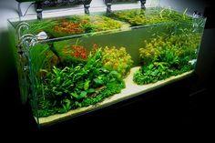 planted tank