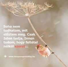 """Hálát adok a mai napért. A legnehezebbeknek tűnő helyzetekben a legerősebb a hitem. Tudom, hogy minden lehetne """"még nehezebb"""". Soha nem tudhatom, mit kerültem el. Soha nem tudhatom, mit előztem meg. Csak Isten tudja. Innen tudom, hogy feltétel nélkül szeret... Így szeretlek, Élet! Köszönöm. Szeretlek ❤️ ⚜ Ho'oponoponoWay Magyarország ⚜ www.HooponoponoWay.hu"""