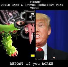 Flowey for President by Lavenderdadragon14.deviantart.com on @DeviantArt