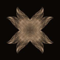 a leaf kaleidoscope Leaves