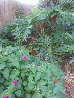 Gardens: Tropical