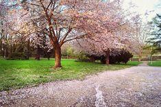 Jenny Rainbow Fine Art Photography Photograph - Blooming Sakura Blessings by Jenny Rainbow