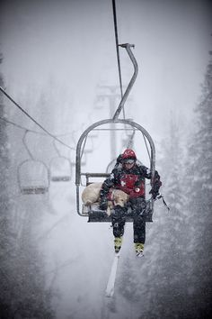 Ski Patrol, dogs, skiing, snow